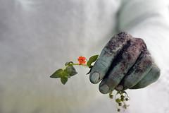 petite fleur (Chocolatine photos) Tags: nature main vert fleur photo photographesamateursdumonde pdc pastel nikon flickr makemesmile macrounlimited