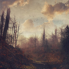 downfall (Dyrk.Wyst) Tags: winter wuppertal atmosphere baretrees colors creek fog forest landscape mood nature outdoor rain trees water wet woodland textures photomanipulation doubleexposure birds clouds broken surreal