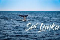 Sri Lanka - Mirissa (samokt04) Tags: a7iii traveling vlog animals ocean sea mammal basic mothernature srilanka bluewhale