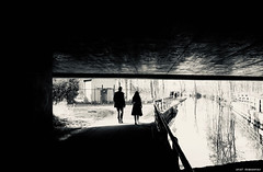 Just like the tree that's planted by the water, I shall not be moved (Johnny Cash) (stef demeester (sometimes off)) Tags: bw blackandwhite bnw fujix100f fujifilmx100f light monochrome nieuwegein shadows stefdemeester straatfotografie streetphotography urban x100f zwartwit