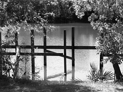 The Pond (Henricus) Tags: pond olympus em5 zuiko 4015028 bw