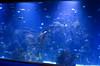 A Small Aquarium [Valencia - 29 January 2019] (Doc. Ing.) Tags: 2019 nikond5100 valencia hortadevalència comunitatvalenciana comunidadvalenciana spain cityofartsandsciences ciutatdelesartsilesciències ciudaddelasartesylasciencias calatrava félixcandela oceanografic santiagocalatrava aquarium fish fishtank