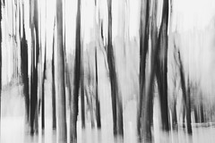 No cantéis a las rosas (.KiLTRo.) Tags: kiltro ar argentina bosque forest wood trees curruhue lanín nationalpark abstract motion movement blur