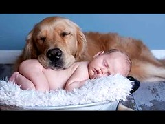 Best Of Funny Cats And Dogs Love Babies Compilation (videosloving) Tags: cats dogs babies baby funnyvideo funny funniest fails funnydogs funnycats cuteanimals cutedogs cutebaby cutepuppy cutekittens compilation comedy viralvideo video videosloving viral justforfun justforlaugh amazing latest laughter trending trynottolaugh new animalslove animals