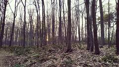 (txchris86) Tags: instagram ifttt forest woods wald trees bäume pflanzen nature natur edited landschaft landscape daylight tagsüber sunset sonnenuntergang frühabends earlyintheevening
