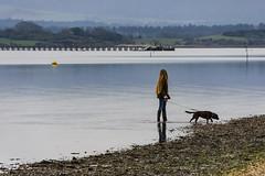 Arne 06-01-2019 23 (Matt_Rayner) Tags: arne dog shipstalbeach