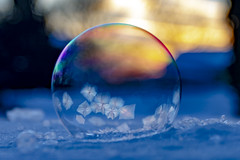 Bubbles in the frost (Notkalvin) Tags: soap bubbles frozen cold winter snow sunset notkalvin mikekline freezing frosty iced crystals michigan wintertime notwarm outside outdoors nopeople horizontal