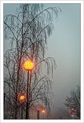 Lingering Mist Later to Intensify_ (Mikec77) Tags: mistymorning streetlights trees dawn