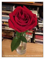 Rose (Doyle Wesley Walls) Tags: lagniappe 9174 rose flower petals stem iphonephoto doylewesleywalls red color books bookshelf leaves vase green
