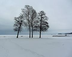lidköping (helena.e) Tags: helene älsa hubil rv motorhome lidköping kronoamping vänern sjö lake snö snow träd tree