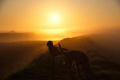 dog days (shanahands2) Tags: sea wall banks sunrise dogs vizsla nikon d750 fx