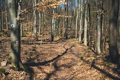 KRIS8313 (Chris.Heart) Tags: forest nature hungary pilis erdő természet túra hiking