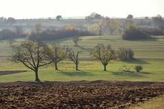 J'aime les arbres (Excalibur67) Tags: nikon d750 sigma globalvision contemporary 100400f563dgoshsmc paysage landscape arbres trees campagne champ nature automne autumn alsace