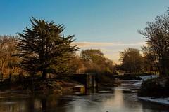 Winter sun (jmiller35) Tags: parklife england liverpool merseyside lakes water ice winter nature park trees sunshine wintersun