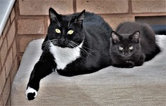 Happy Valentines Day. (pstone646) Tags: cats kitten pets indoors friends blackandwhite cute