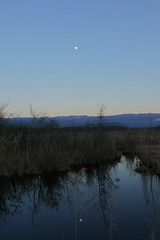 Reflection in the marsh (boutigny) Tags: marais lavours ain bugey valromey marsh moon reflection water