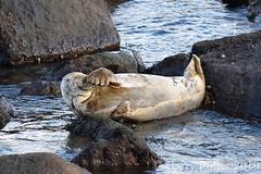 That Monday morning feeling (Barry Potter (EdenMedia)) Tags: barrypotter edenmedia nikon d7200 seal ravenscar