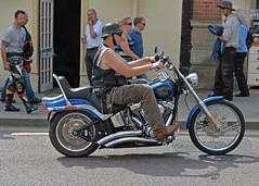 Easy Rider... (Harleynik Rides Again.) Tags: softail custom harleydavidson biker rider harleynikridesagain