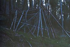 (Federico Raviele) Tags: wood bush crrafting 35mm alps italy sciliar seiser alm analog camera