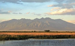 Golden Hour on the Valley Floor (Patricia Henschen) Tags: blanca group mountain mountains clouds sangredecristo rural ranch backroad countryside summer alamosa colorado southriverroad sanluisvalley goldenhour sunset wetland ducks