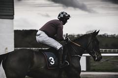 DSC_0007 (1) (fullerton42) Tags: straftford racecourse stratfordracecourse horse horses racehorse horseracing race punter punters specatators sport equine england