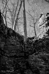 On this Rock (Aaron Hufnagel) Tags: nikon nikond600 d600 tokina tokina2870mm tokinaatx atx 2870mm madison madisonindiana cliftyfalls cliftyfallsstatepark indianastatepark statepark nature outdoor tree trees landscape blackandwhite bw
