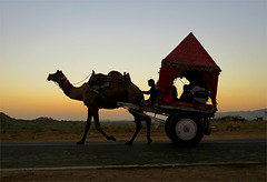 Homeward Bound (Mary Faith.) Tags: camel animal desert cart travel tourism pushkar city india holy sky evening