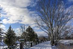 Winter walk [1539] (my.travels) Tags: winter snow porsuk porsukçayı postcard eskisehir eskişehir turkey türkiye river riverside trees nikon d7200 odunpazarı tr