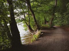 Hiking trail (at Tiefwarensee) (Lichtbursche) Tags: tiefwarensee see wasser weg wandern waren nsg naturschutzgebiet mecklenburgvorpommern natur deutschland path way hike nature grün green wald forest woods bäume trees falkenhägerbruch outside outdoors germany sea s8