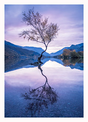 Llyn Padarn - Llanberis II (Christopher Pope Photography) Tags: wales singletree sunrise llanberis dawn reflections llynpadarn lake snowdonia northwales mountains