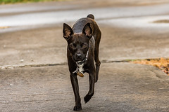 The Greeting Committee (Back Road Photography (Kevin W. Jerrell)) Tags: brutus dogs pets neighborhoodphotography backroadphotography nikond7200 friends
