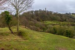 Peak Hill-1-20 (Sheptonian) Tags: somerset rural scenic landscape trees fauna grassland