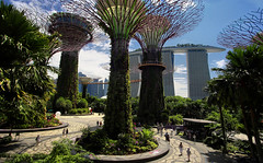 Walking in the futuristic Supertree Grove (B℮n) Tags: marinabaysands singapore thomas raffles island trading port tourism holiday travel mrt train subway marina bay temples museum waterfront garden green city fullyautomated driverless nodriver vacation tourist exploring central metropole landmark chineseheritage food business commercial building unitedchinesebank rafflesplace mrtstation downtown core esplanade esplanadebridge leisurely marinabay skyline reflections thefloat rafflesavenue jetty enchanting happyplanet asiafavorites hotel gardensbythebay dragonflylake dragonflybridge fountain supertreegrove skywalk supertree park ocbcskywalk lightshow sounds 50metres gardens daytime 100faves topf100
