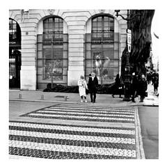 the white stripes (japanese forms) Tags: ©japaneseforms2019 кошка ネコ ボケ味 モノクロ 日本フォーム 自転車 黒と白 bw blackwhite blackandwhite blancoynegro bokeh candid cat cats gata gato gatto kat kater katje katze kot kotka monochrome neko parijs paris pussy random schwarzweis square squareformat strasenfotografie straatfotografie streetphotography thewhitestripes zwartwit