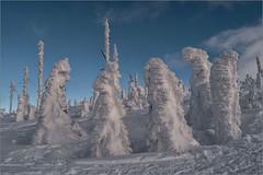 Versammlung / Meeting (ludwigrudolf232) Tags: bäume schnee dreisessel winter schneeschuhtour