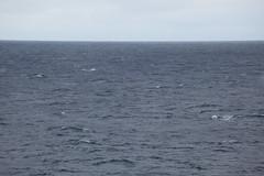 IMG_0335 (y.awanohara) Tags: humpbacks humpbackwhales whales whale southgeorgia scotiasea january2019 wildlife cetacean