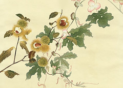 Japanese chestnut and unknown vine (Japanese Flower and Bird Art) Tags: flower chestnut castanea crenata fagaceae sadao murakami nihonga woodblock print japan japanese art readercollection