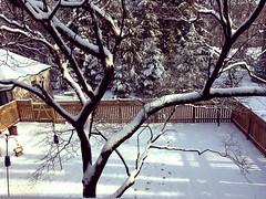Sunny & bright view this morning (karma (Karen)) Tags: baltimore maryland backyard trees fences feeders shadows iphone hff topf25