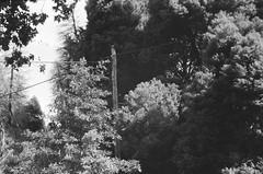 Utility pole (Matthew Paul Argall) Tags: beirettevsn 35mmfilm kentmere100 100isofilm blackandwhite blackandwhitefilm utilitypole