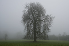In The Presence Of The Giant (JamieHaugh) Tags: bourtononthewater gloucestershire england uk gb britain cotswolds sony alpha a7rii zeis ilce7rm2 nature trees giant fog mist day field horizon green grass morning large cotswold landscape