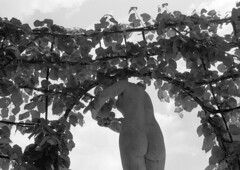 Spring is in the air (rob kraay) Tags: sculpture trees blackandwhite robkraay leaves warandeparkbrussels cloudysky statuary branches arch bw