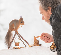 man holding a axe and a Red squirrel standing on a fireplace (Geert Weggen) Tags: squirrel camera red animal backgrounds bright cheerful close color concepts conservation culinary cute damage day earth environment environmental equipment love valentine flower winter snow photo model person human man dianths fire wood axe fireplace matches burd cooking camping makecamp bispgården jämtland sweden geert weggen hardeko ragunda