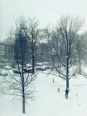 (LaTur) Tags: winter snow dcist