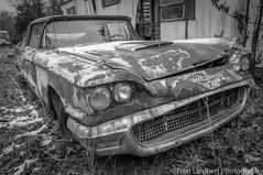 truck junkyard 12:18 1 (fred_lambert) Tags: thunderbird rust newjersey junkyard nikond300s
