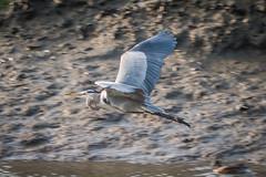 OC_Birds_12-24-18-8