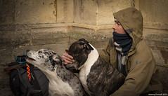 Don't look (zolaczakl) Tags: bath abbeychurchyard dogs people 2019 nikond800 march nikonafsnikkor50mmf18glens photographybyjeremyfennell somerset uk england jeremyfennellphotography