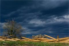 Mikado (MyLavie) Tags: lumiere printemps piquets bois arbre myla mylenelavie ciel bleu nuage orage