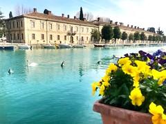Il profumo della primavera mi fa tornare la voglia di fotografare 😍😀 (Vincenzo Lisacchi detto Mobys) Tags: verona veneto iphone7 lagodigarda gardalake peschieradelgarda peschiera
