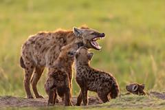 Hyena family (Photobirder) Tags: hyenafamily eastafrica kenya masaimara