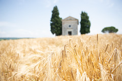 Tuscany (Emma McIntaggart) Tags: tuscany church wheat sienna florence trees summer